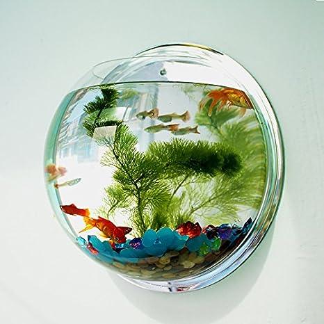 Acuario pecera colgante macetero adorno pared diseño decoracion interiores restaurantes 23 cm de OPEN BUY: Amazon.es: Hogar