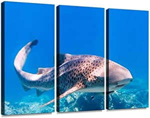 rare close up encounter with endangered species zebra leopard shark - Canvas Wall Art - Modern Office Decoration Painting Artwork for Living Room Bedroom - 3 Panels