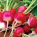 Sparkler White Tip Radish Seeds, 100+ Premium Heirloom Seeds, ON SALE!, (Isla's Garden Seeds), Non Gmo, 90% Germination, Survival Seeds