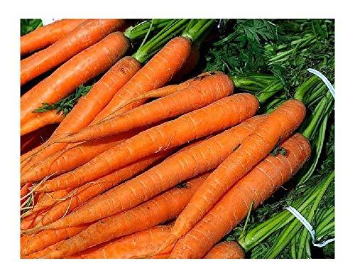 David's Garden Seeds Carrot Imperator 58 SL1871 (Orange) 500 Heirloom Seeds