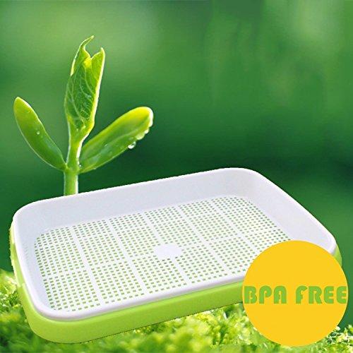 Seed Sprouter Tray BPA Free PP Soil-Free Big Capacity Healthy Wheatgrass Grower 9.84 x 13.4inch by Miyuki Nakajima