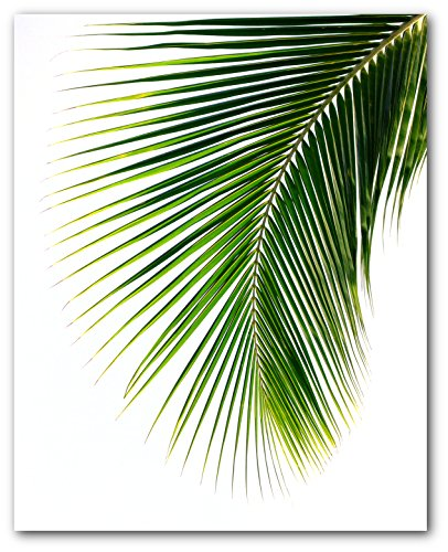 - Palm Leaf Print, Abstract Tropical Leaf, 8 x 10 Inches, Unframed