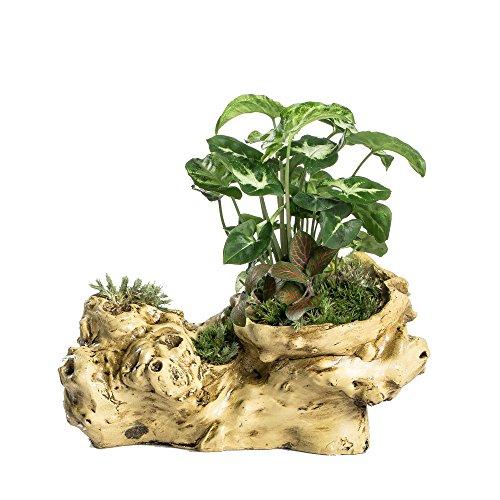 Driftwood Stump - 6