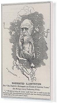 Cuadros en lienzo de Charles Darwin como un árbol-escalada ...