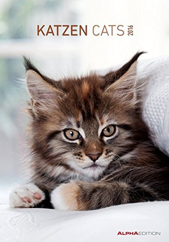 Katzen 2016 - Cats - Bildkalender (24 x 34) - Tierkalender