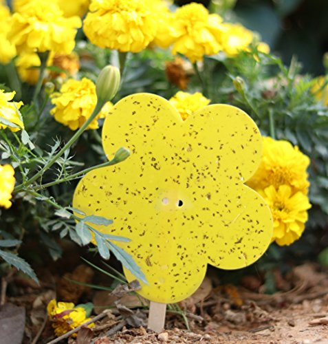Plai 20 Pack Dual-Sided Plant Yellow Sticky Traps for Flying Pests, White Fly, Winged Aphids, Leaf Miners, Black Fungus Gnats