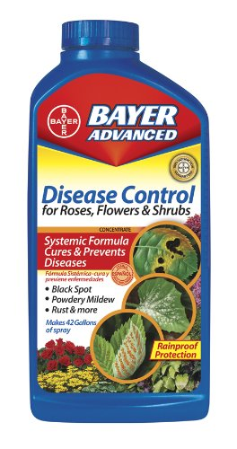 Bayer Advanced 701250 Disease Control for Rose, Flower and Shrubs Concentrate, (Disease Control Concentrate)