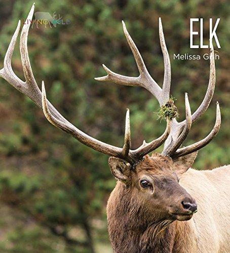 Read Online Elk (Living Wild) ebook