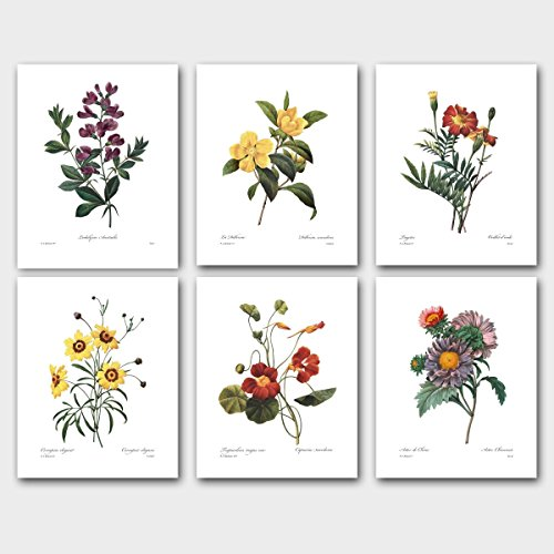 Set of 6 Botanical Prints, Redoute Wall Art (Autumn Room Decor) Asters Sweet Pea Daisy