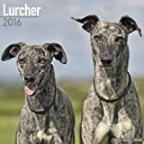 Lurcher Calendar - Breed Specific Lurcher Calendar - 2016 Wall calendars - Animal Calendars - Monthly Wall Calendar by Avonside