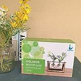 Ivolador Desktop Glass Planter Bulb Plant Terrarium