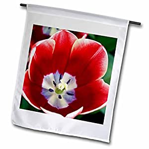 Danita Delimont - Flowers - Netherlands, Lisse Keukenhof Garden flowers - EU20 CMI0508 - Cindy Miller Hopkins - 12 x 18 inch Garden Flag (fl_82295_1)