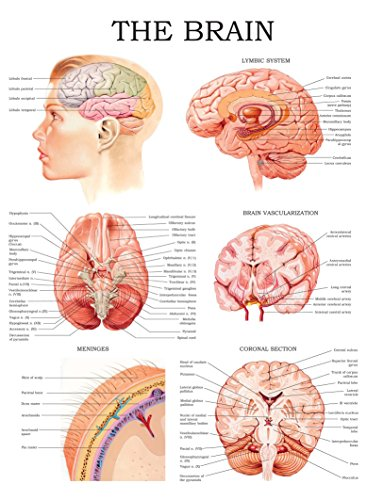 - The brain e-chart: Quick reference guide