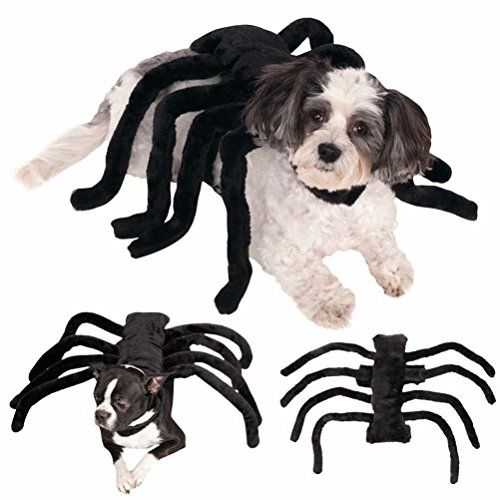Spide (Tarantula Pet Costume)