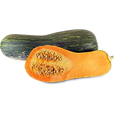 Pumpkin 'Naples Long' (Cucurbita Moschata) Vegetable Plant Seeds, Late Heirloom : Garden & Outdoor