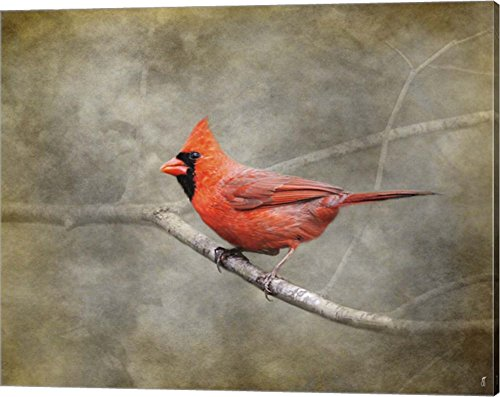 His Red Glory Cardinal by Jai Johnson Canvas Art Wall Picture, Gallery Wrap, 20 x 16 ()