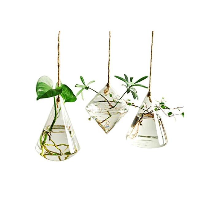 Terrarium-Container-Flower