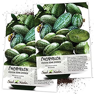 Seed Needs, Cucamelon/Mexican Sour Gherkin (Melothria scobra) Twin Pack of 65 Seeds Each : Garden & Outdoor