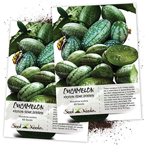 Seed Needs, Cucamelon/Mexican Sour Gherkin (Melothria scobra) Twin Pack of 65 Seeds Each ()