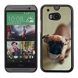 Exotic-Star Fundas Cover Cubre Hard Case Cover para All New HTC One (M8) ( Perro curioso lindo )