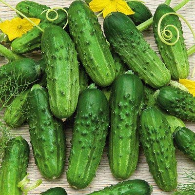 Pioneer Cucumber Seeds, 125+ Premium Heirloom Seeds, Gardeners Choice for pickling or fresh, (Isla's Garden Seeds), Non Gmo Organic Survival Seeds, 100% Pure, 90% Germination, Highest Quality!
