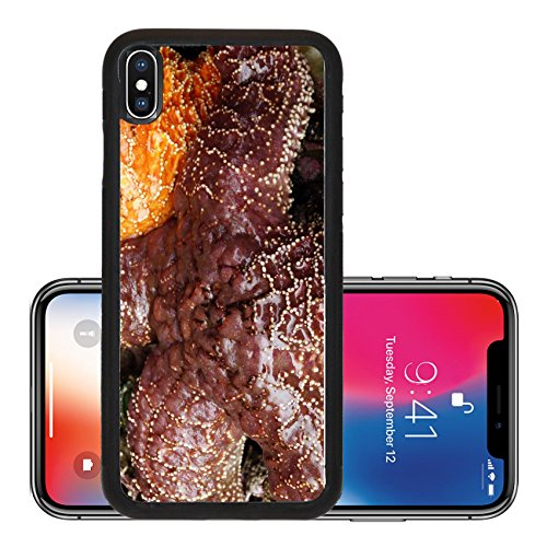 Liili Premium Apple iPhone X Aluminum Backplate Bumper Snap Case Purple sea star Pisaster ochraceus exposed by low tides on an Oregon Beach near Yaquina Head Newport echinoderms belonging to - Target Newport Beach