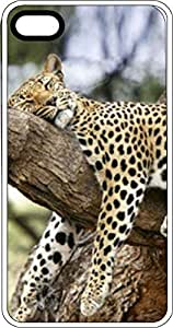 Cheetah Lounging In Tree White Plastic Case for Apple iPhone 5 or iPhone 5s by supermalls