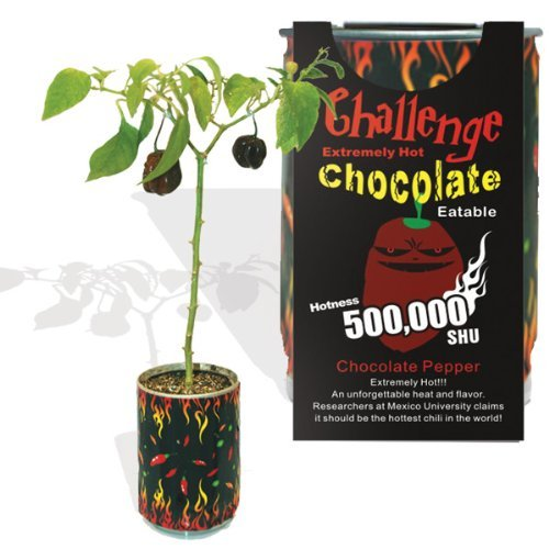 Add Chocolates (Chocolate Habanero Pepper - All-included-planter-kit . Just Add Water.)