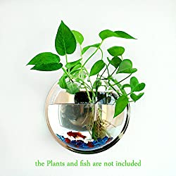 Plant Wall Hanging Fish Bubble - Wall Mounted Acrylic Fish Bowl Home Decoration(2-pack)