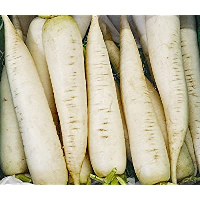 Radish Seeds - White Icicle - Heirloom - Liliana's Garden : Garden & Outdoor