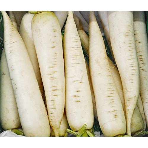 Radish Seeds - White Icicle - Heirloom - Liliana's Garden