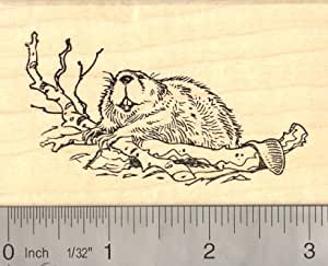North american beaver rubber stamp arts for Rubber stamps arts and crafts