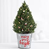 The Christmas Factory - eshopclub Same Day Christmas Flower Delivery - Online Christmas Flowers - Christmas Flowers Plants - Send Christmas Plants