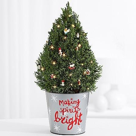 The Christmas Factory - eshopclub Same Day Christmas Flower Delivery - Online Christmas Flowers - Christmas Flowers Plants - Send Christmas Plants by eshopclub