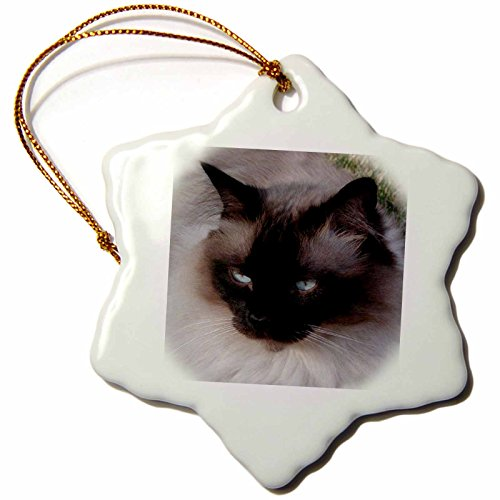 Snowflake Cat - 3dRose ORN_1220_1 Siamese Cat Snowflake Porcelain Ornament, 3-Inch