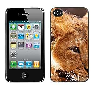 Cubierta de la caja de protección la piel dura para el Apple iPhone 4 / 4S - ginger lion cub cute African king animal