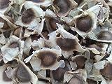 100 Moringa Oleifera Seeds Drumstick Tree Pure Organic 100%