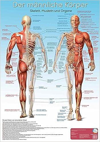 Lernposter Anatomie - Der männliche Körper: Der männliche Körper mit ...