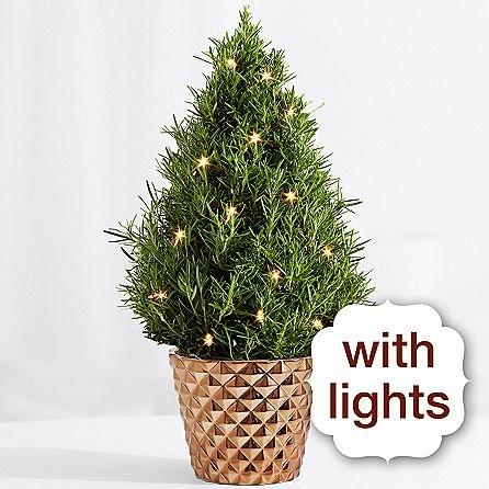 Family Christmas Tree - eshopclub Same Day Christmas Flower Delivery - Online Christmas Flowers - Christmas Flowers Bouquets & Plants - Send Christmas Centerpiece by eshopclub