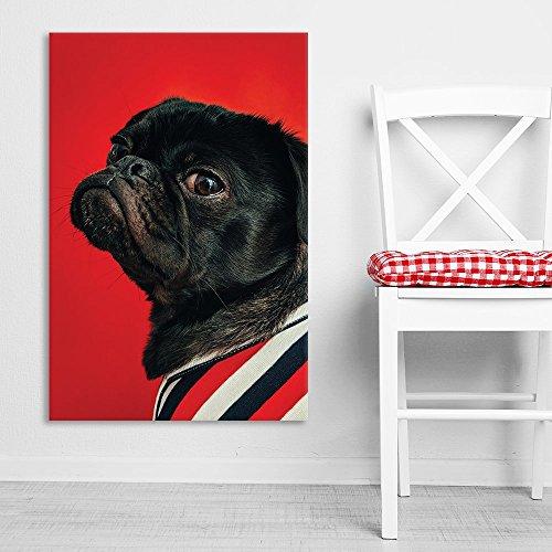 A Black Pug Dog on Red Background