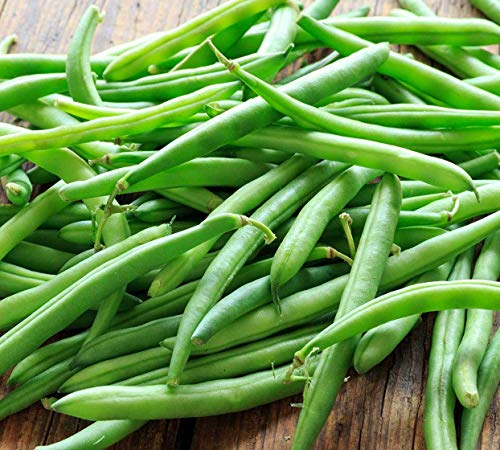 Blue Lake Bush Green Bean Seeds, 50+ Premium Heirloom Seeds, Fantastic Addition to Home Garden!, (Isla's Garden Seeds), Non GMO Organic, 90% Germination Rates, 100% Pure, Highest Quality Seeds (Best Bush Green Beans To Grow)
