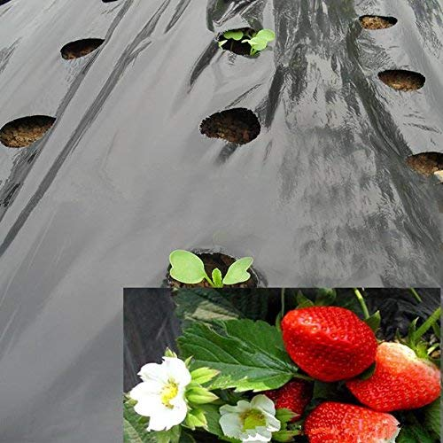 - OriginA 1 mil Plastic Mulch, Garden Mulch, Plastic Microporous Film, Strawberry Tomato Weed Control Polyethylene, Black,6 Holes,Hole Dia 2.36