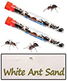 New Ant Farms - Best Reviews Guide