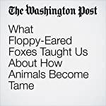 What Floppy-Eared Foxes Taught Us About How Animals Become Tame | Lee Alan Dugatkin