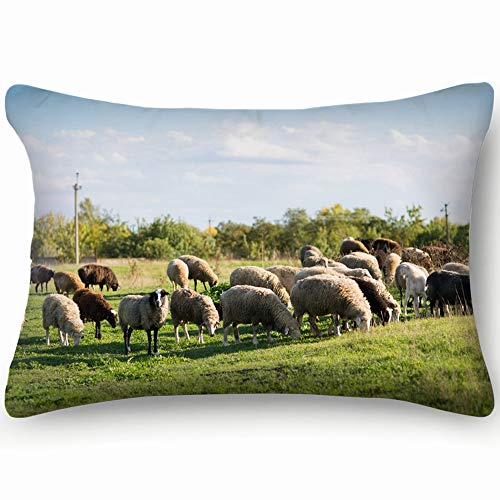 best bags Sheep Graze On Field Animals Wildlife Nature Skin Cool Super Soft and Luxury Pillow Cases Covers Sofa Bed Throw Pillow Cover with Envelope Closure 1624 Inch (The Best Sofa Bed Australia)