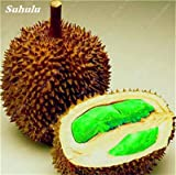 5 Pcs Heirloom Durian Seeds Outdoor Non-Gmo Organic Juicy Bonsai Fruit Plant Bonsai Tree Sementes So Delicious Healthy Food 2