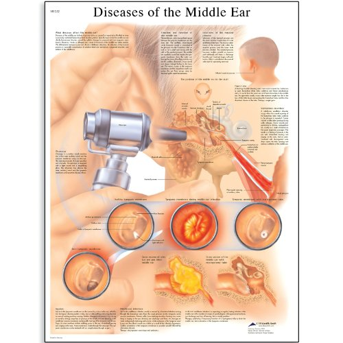 ear anatomy chart - 7