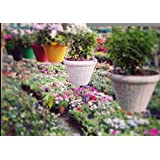 GARDENS NEED 110007 Juhi Hanging Pot Set (Multicolour, 4-Pieces, Plastic)