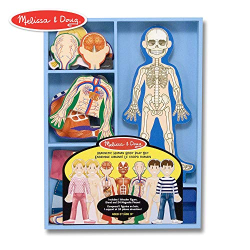 (Melissa & Doug Magnetic Human Body Anatomy Play Set (Anatomically Correct Boy and Girl Magnets, 24 Magnetic Pieces and Storage Tray))