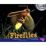 Fireflies (Nocturnal Animals)